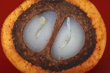 Пальмовое масло: вред и польза