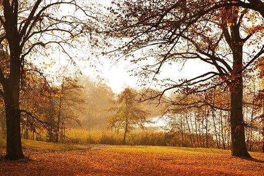 #wagrowiec #wielkopolska #polska #poland #wągrowiec #jeziorodurowskie #lake #autumn #jesien #jesień  Fot. Paulina Ciszak