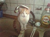 Η   ΕΦΗΜΕΡΙΔΑ   ΤΩΝ    ΣΚΥΛΩΝ: Χαρίζονται δύο χαριτωμένα γατάκια...