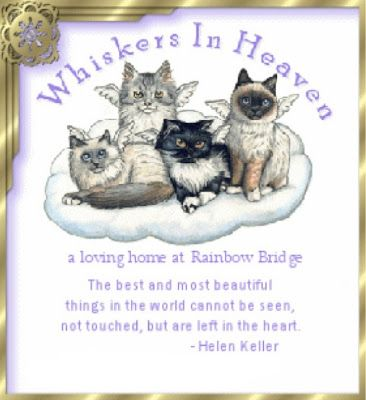 Whiskers in Heaven | Jewels Art Creation