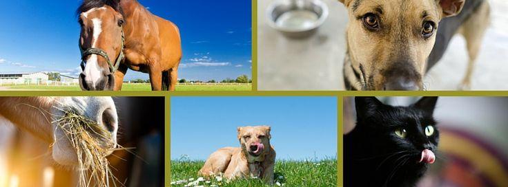 In 2015 hebben we veel geschreven, bijvoorbeeld over luchtzuigen en maagkruiden, gezonde diervoeding, zelfgemaakte vliegenspray en honden die gras eten.