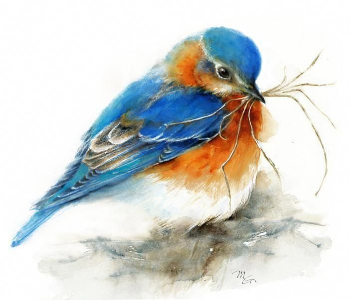 Bluebird Watercolor – Archival Print #watercolorarts #WatercolorartIdeas #artpai…