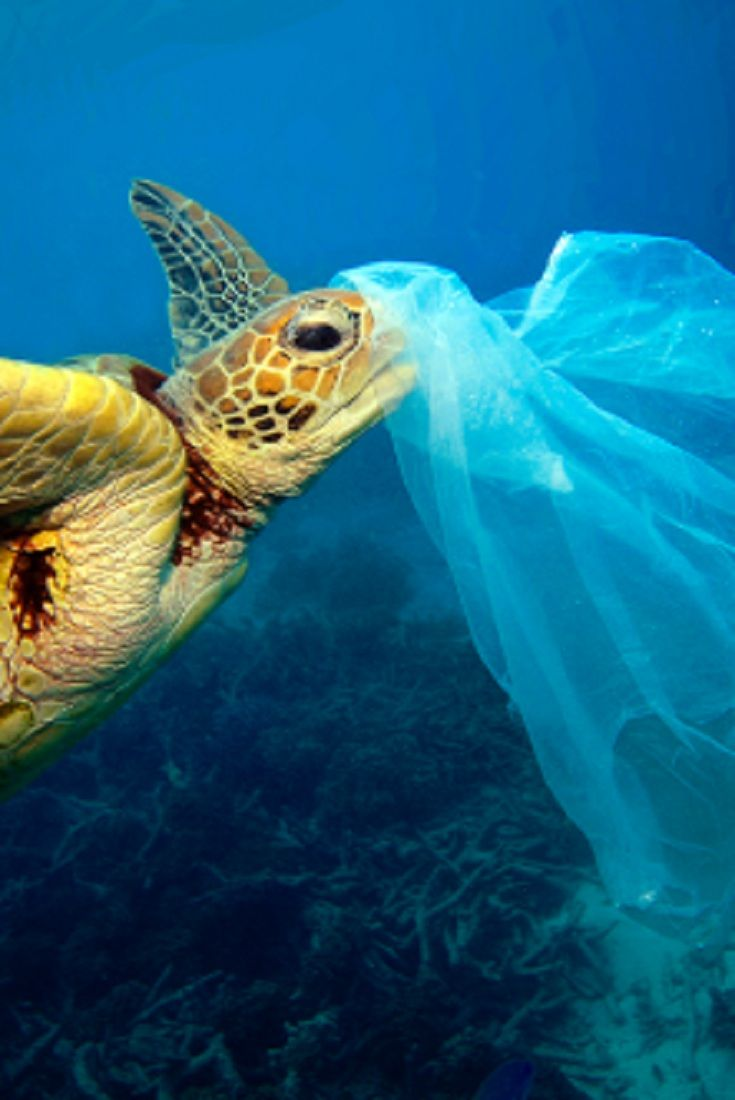 Image of: Wild Animals Silent Killers The Danger Of Plastic Bags To Marine Life video danger plastic bags marine life seaworld Pinterest Sea World Sea And Animals Pinterest Silent Killers The Danger Of Plastic Bags To Marine Life video