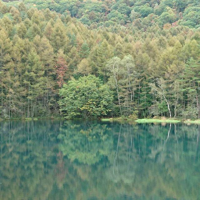 【ebi0725】さんのInstagramをピンしています。 《長野県の御射鹿池。撮り方によって凄く綺麗に撮れます。紅葉なら更にですね。【2016年10月9日撮影】 #風景 #風景写真 #長野県 #信州 #池 #ため池 #紅葉 #緑 #森 #森林 #旅 #茅野市 #CM #絵画 #水面》