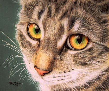 8x10 on orange mat board with Primacolor pencils and a bit of solvent to blend the background. The whiskers are white acrylic. This is my entry to the CPM monthly challenge.