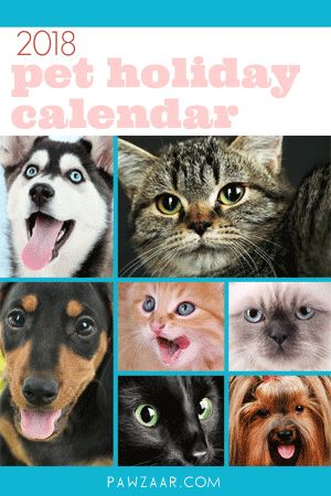 Calendar of pet holidays and awareness days, weeks and months centered around dogs and cats.