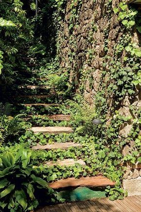 78 melhores ideias sobre plantas de sol pleno no pinterest - Plantas pleno sol ...