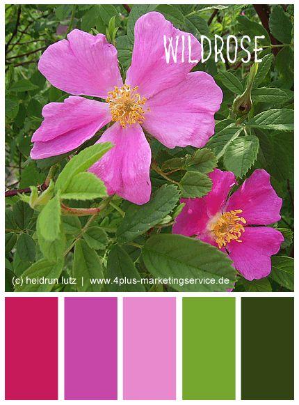 1000 images about design farbinspiration auf - Magenta wandfarbe ...