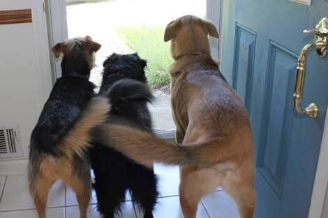 I have 3 dogs: Matt, Dave, and Barry,