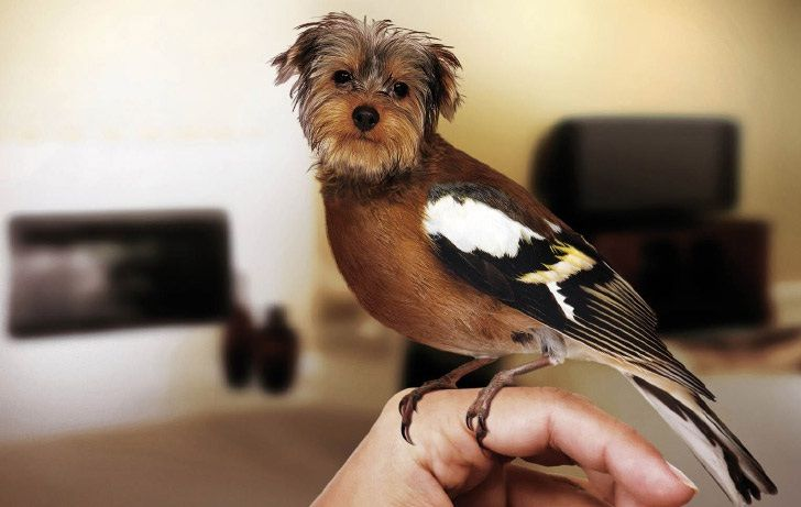 A new Yorkshire terrier-Dirds Are So Cool