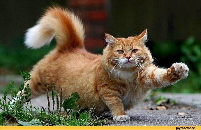 котэ,прикольные картинки с кошками,котэ марширует,песочница