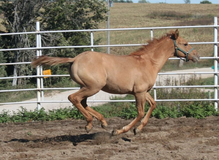 238 best images about Horse Color Galore: Foal Coats on ...