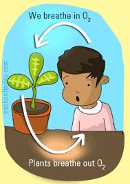 Image result for plants and air
