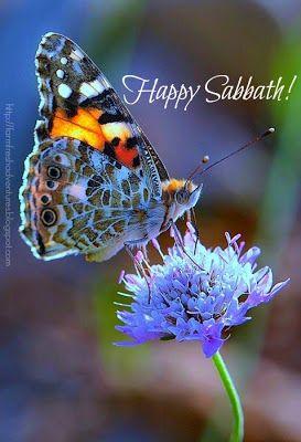 Sabbath Wishes
