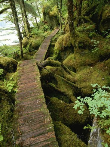 Trail to Punchbowl Cove, Misty Fiords National Monument Photographic Print by Michael Melford