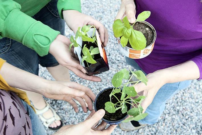Seedling exhange