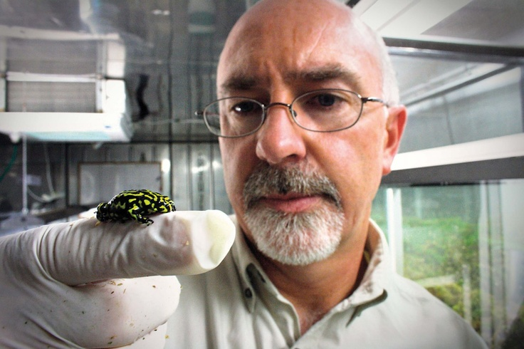 Scientists have discovered that the secret to the survival of critically endangered northern corroboree frogs may be a short, sharp winter.