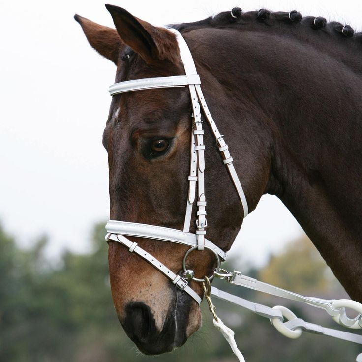 17 Best Images About Equestrian Vaulting On Pinterest