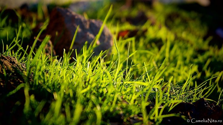 fresh grass, spring, green