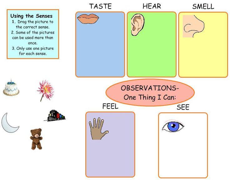 senses preschool activities 15 best images about senses on 5