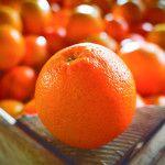 Апельсины: Navelina, Вашингтон пуп, Лейн поздно, Валенсия семян меньше, Валенсия поздно, Salustiana
