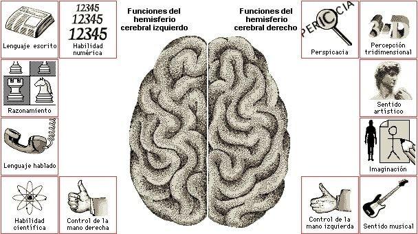 Wordpress Com Anatomia Del Cerebro Humano Cerebro Cerebral