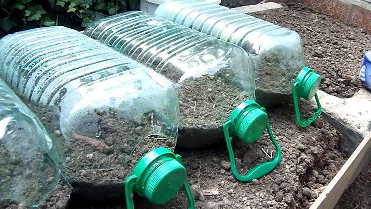 Huerta en casa y sugerencias.. mini invernadero para almazigos de vegetales