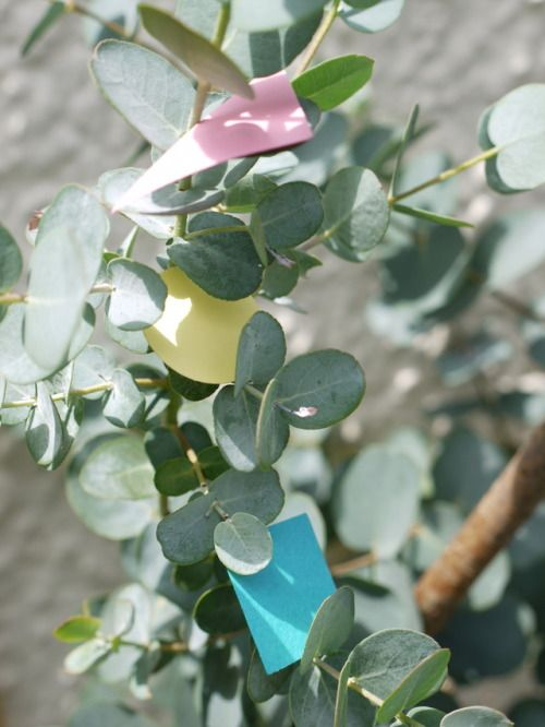 Some Lorelai plain colour hiding in the eucalyptus! (as you do)   Luxury handmade party decorations Check out our store - paperstreetdolls.etsy.com