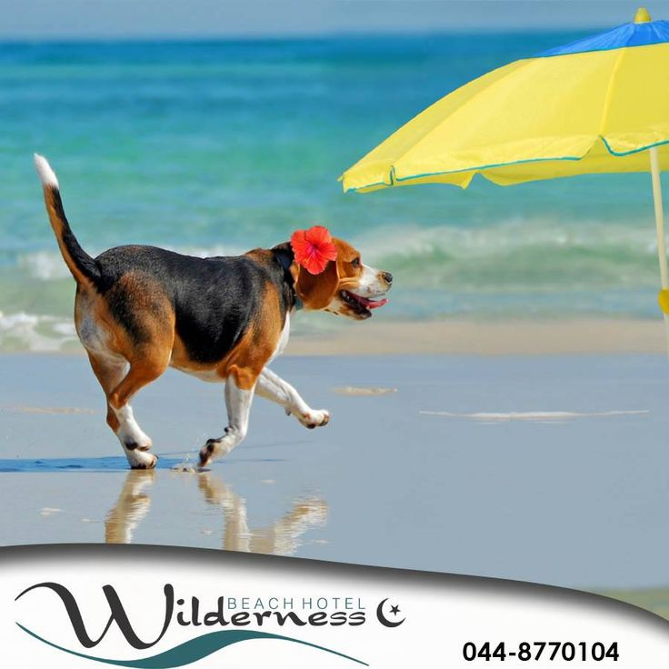 Did you know that at Wilderness beach even your canine friend can enjoy the weather? Wishing you all a fabulous Friday from Wilderness Beach Hotel. #lifestyle #ilovemydog #petcare