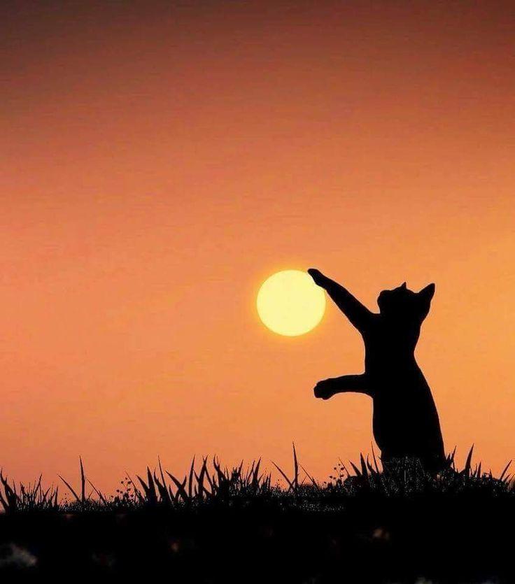 Картинки закат и кошка