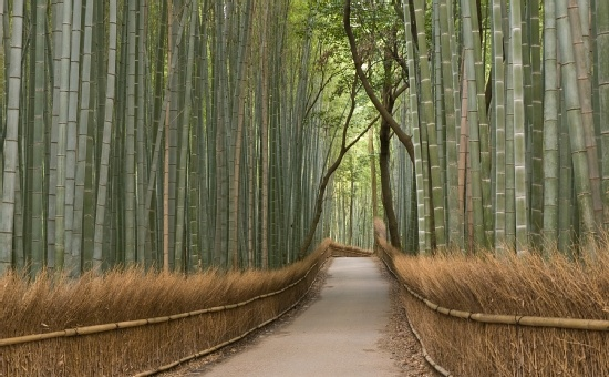 Japanese Zen Gardens | Kyoto Day Trips photos guide, Japan