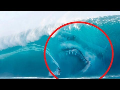 Best 25+ Megalodon attack ideas on Pinterest | Is ...