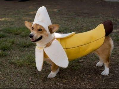 Disfraces para Mascotas en Halloween - Disfraz de plátano
