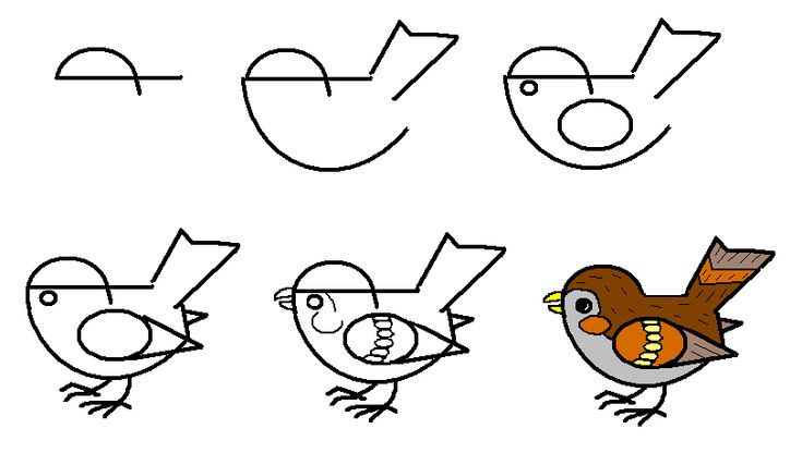 How to draw sparrow