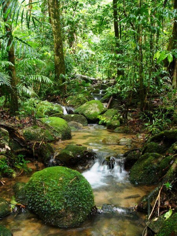 #Amazon #rainforest.