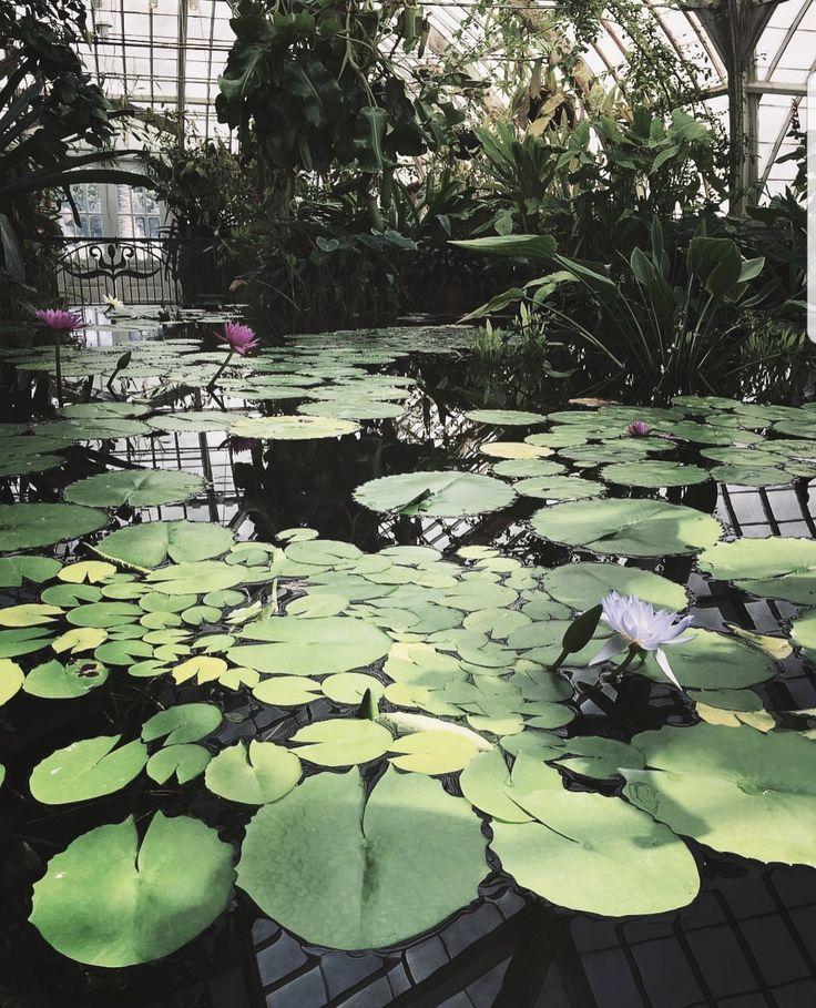 530 besten Wild green Bilder auf Pinterest | Grün, Pflanzen und ...