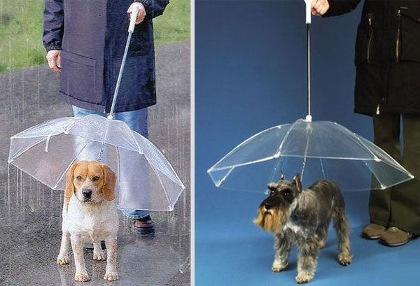 Гламурный поводок-зонт для собаки