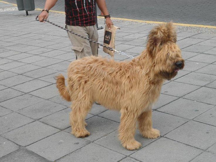 Dog puebla