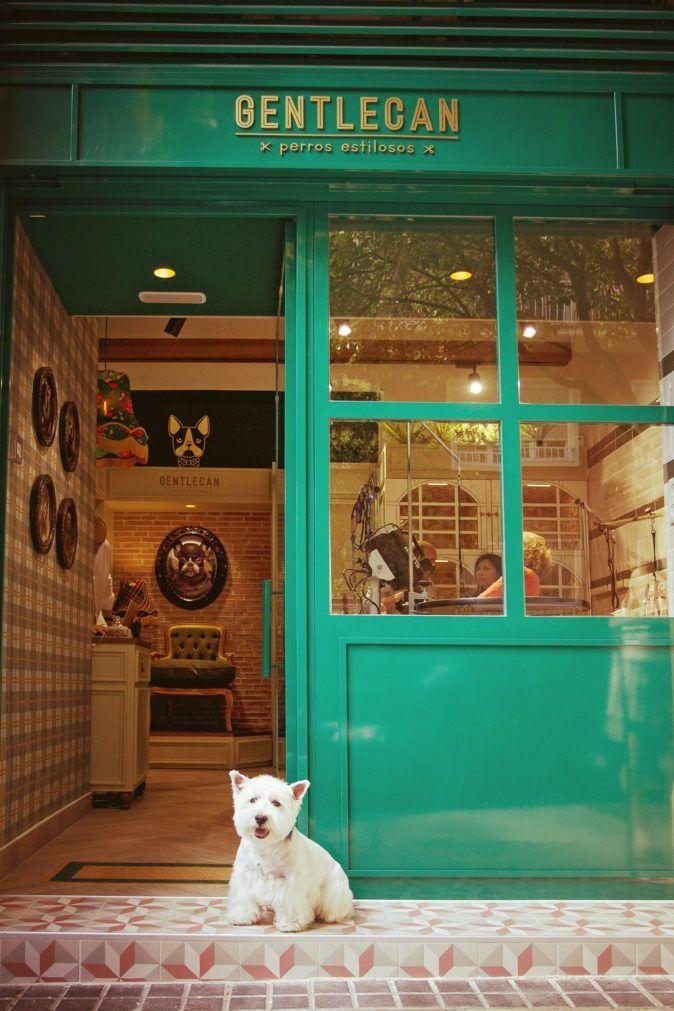 Gentlecan Una Exclusiva Peluqueria Canina En Pleno Barrio De