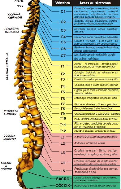 Quiropraxia em Santos: Quiropraxia: A importância da postura correta.