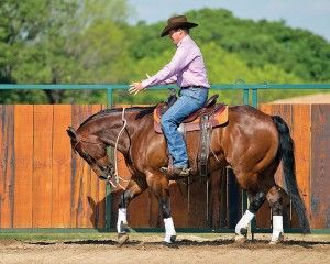 Teach your horse the basics of flexing vertically and softening to the bit