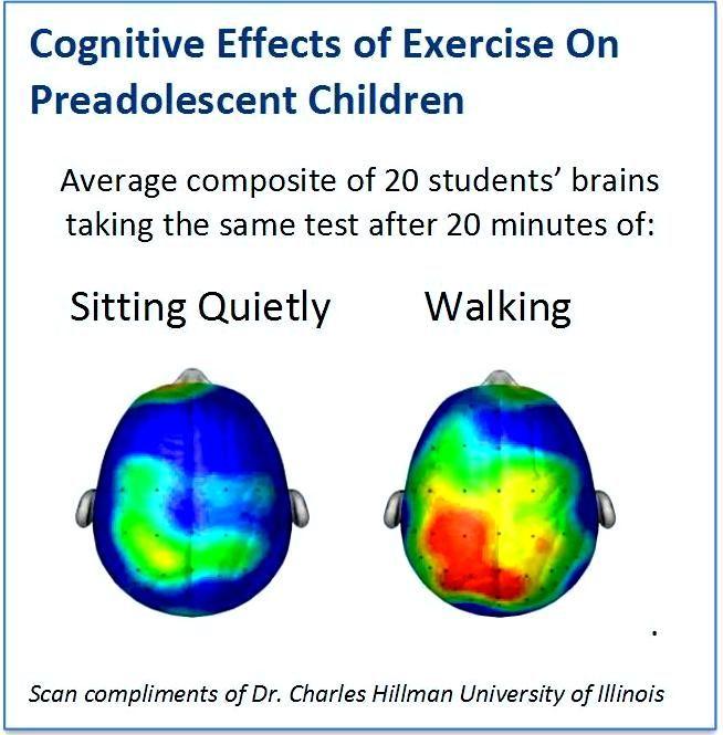 Η σωματική άσκηση δεν είναι καλή μόνο για το σώμα... αλλά και για το μυαλό! Βελτιώνει την ετοιμότητα, την προσοχή, την ικανότητα για μάθηση, τις ακαδημαϊκές επιδόσεις!  Δείτε τη διαφορά στους εγκεφάλους μαθητών μετά από καθισιό και μετά από ήπια αερόβια άσκηση (περπάτημα)! Για να διατηρούμε τις γνωστικές μας ικανότητες κατά τη διάρκεια της ζωής, χρειάζεται κίνηση & δράση, όχι μόνο σκέψη!