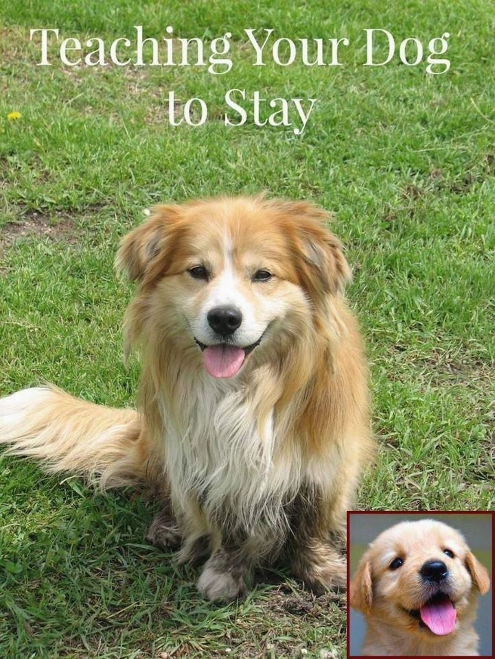 How To Train A Dog To Stop Barking All The Time And Dog Training