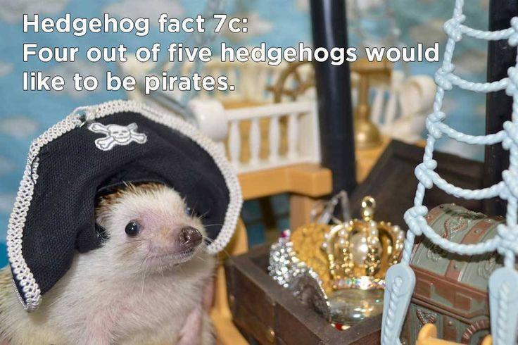 arr, a hedgehog fact