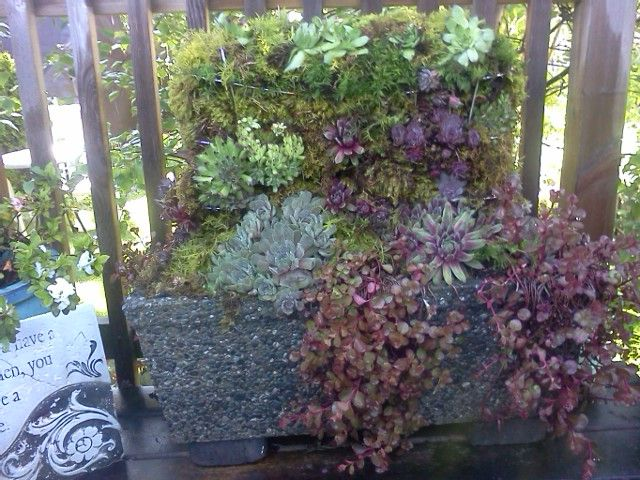 cement planter with a wine rack settled into the top layered with moss and filled with hens and chicks and sedum hanging over edges