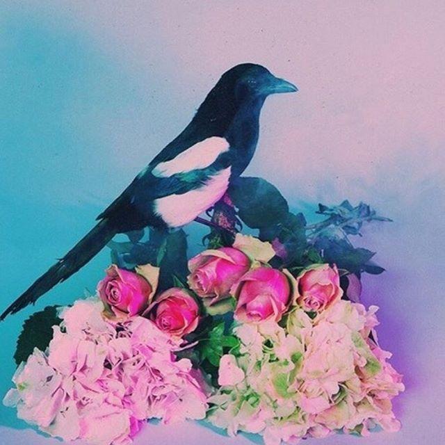 "sassymukemgc/2016/08/22 15:54:16/ ""I miss you."" no metaphors, no other beautified words, i just miss you. _______ #pink#red#blue#aesthetic#light#bird#magpie#flowers#love#alexturner#moodboard#colouredtheme#theme#colour#color#love#art#photography#tumblr#imissyou#music#artists#tlsp#mileskane#alex#turner#arcticmonkeys#singer#love#adorable#beautiful#sadpoem"
