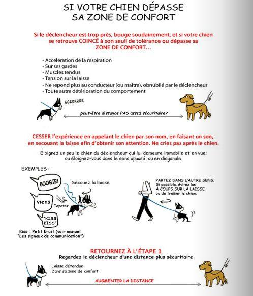 Savez-vous communiquer avec votre chien ? comprenez-vous ce qu'il veut vous dire ? connaissez-vous les signaux d'apaisement ?Parler chien, c'est loin d'être simple. Bien souvent, nous comprenons l'inverse de ce que notre compagnon voudrait nous dire ! Aujourd'hui je vais vous parler d'un sujet qui me tient à coeur : l'agressivité en laisse envers les …