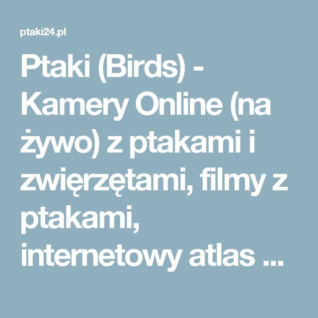 Ptaki (Birds) - Kamery Online (na żywo) z ptakami i zwięrzętami, filmy z ptakami, internetowy atlas ptaków, darmowe kolorowanki i łamigłówki dla Dzieci do wydrukowania. - Ptaki (Birds) - Kamery Online (na żywo) z ptakami i zwięrzętami, filmy z ptakami, internetowy atlas ptaków, darmowe kolorowanki i łamigłówki dla Dzieci do wydrukowania