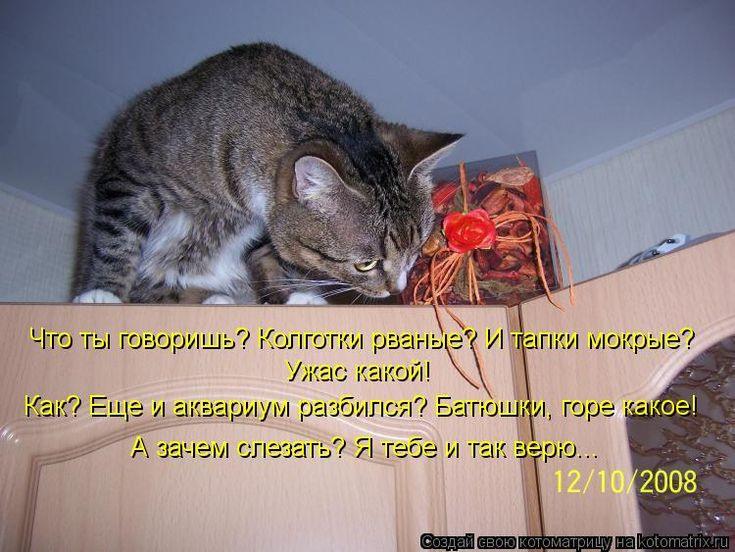 приколы с котами с надписями: 22 тыс изображений найдено в Яндекс.Картинках