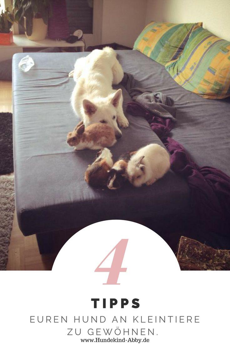 #Hund #Hundeblogger #Hundeliebe #Wissen #Hundeerziehung #Kleintiere #Kaninchen #Meerschwein